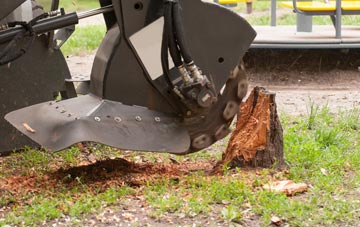 professional Wrexham stump grinding services