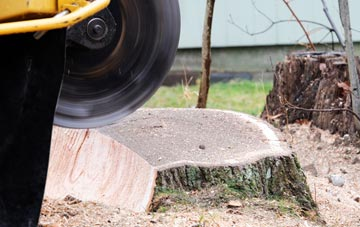 tree stump grinding Wrexham