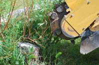 free Wrexham tree stump grinding quotes